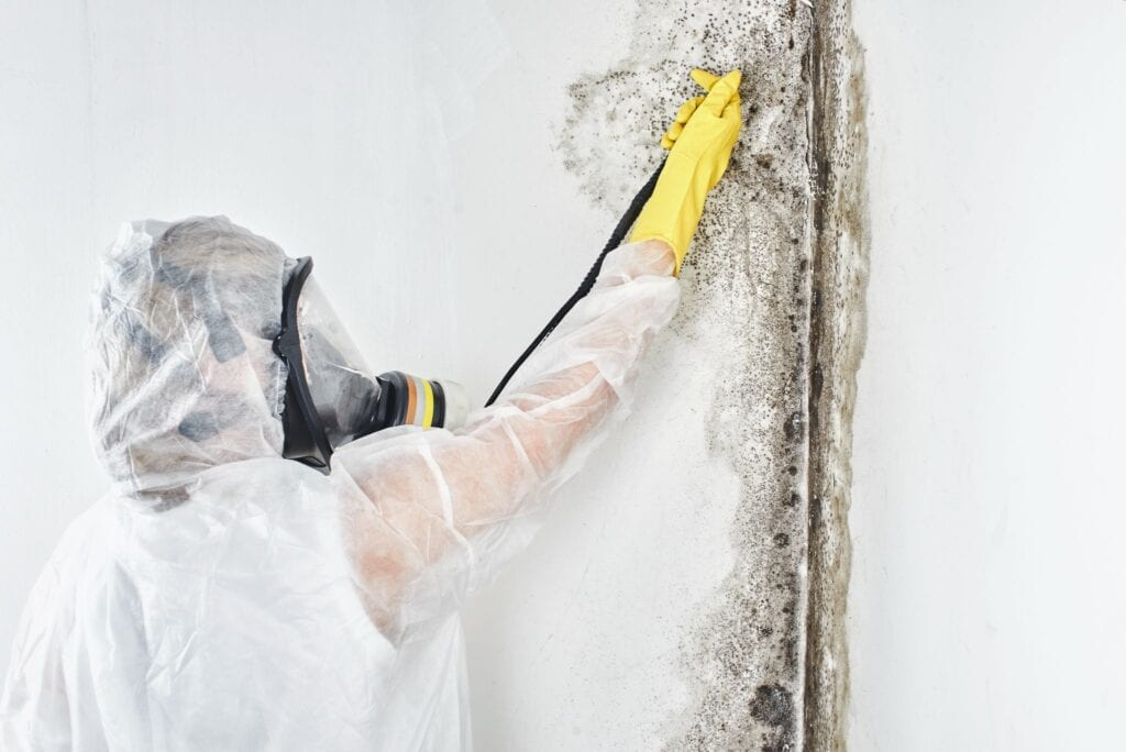 removal of black fungus in the apartment and house