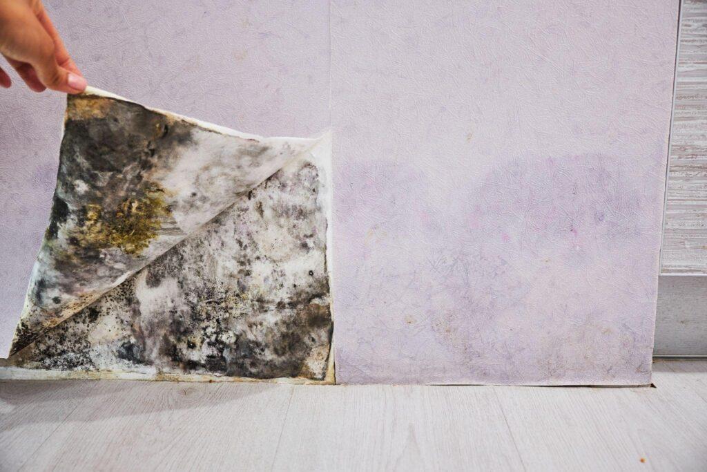 development of mildew under the Wallpaper