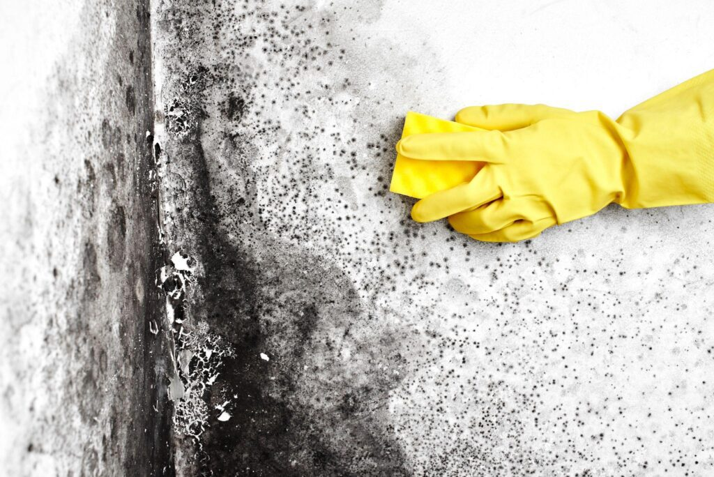A hand in a yellow glove removes the black mold from the wall